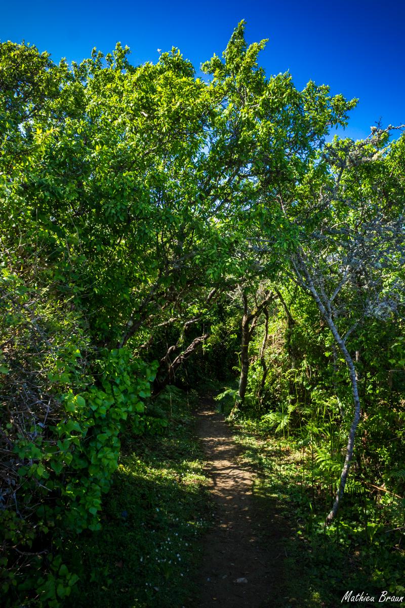 Le chemin se faufile entre les arbres